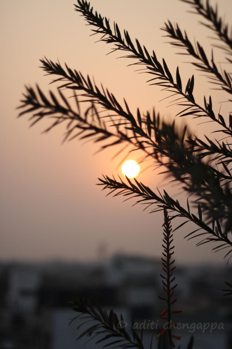 sunsetblog